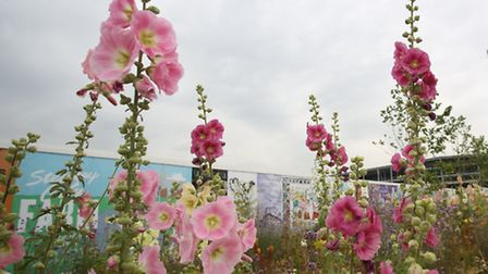 The temporary wild meadow takes the edge off the housing site it surrounds with bursts of hollyhocks