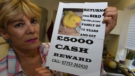 Shahin Asadi holds a missing poster to help find her missing parrot