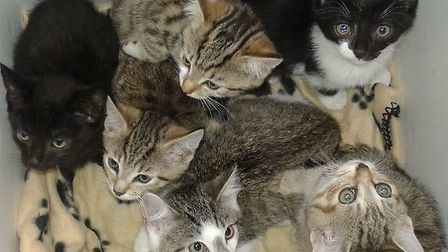 Some of the cats rescued by the Celia Hammond Animal Trust