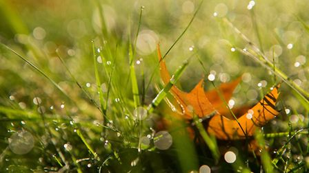 A leaf in grass. Picture: Daniel Leal-Olivas/PA Wire/Press Association Images