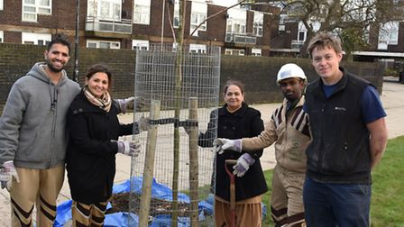 Trees for Cities planted 50 trees in St John's Green to celebrate Newham's 50th birthday