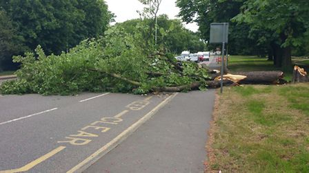 A horse chestnut tree blown over by the bad weather in High Road, Woodford Green.