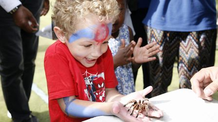 Theo Tuitt, 4, meets a spider at the Star Bright nursery open day