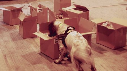 Police dogs sniff the boxes.