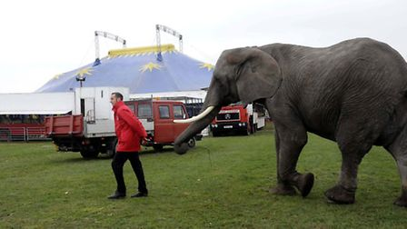Elephant at the circus. Picture: PA Archive/PA Images
