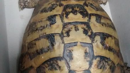 Stray, injured tortoise rescued by RSPCA from Bute Road, Barkingside