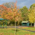 The colours this autumn have been stunning and this photo in Valentines Park shows the different col