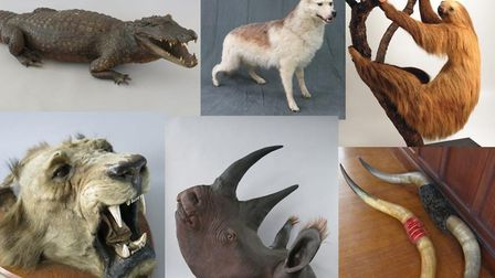 Some of the taxidermy animals Jason Hopwood stole from a Wimbledon warehouse. Picture: Met Police