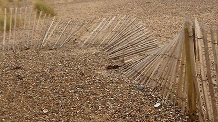 Damage at the Gunton Warren Nature Reserve, which has had the chestnut fencing vandalised with the p