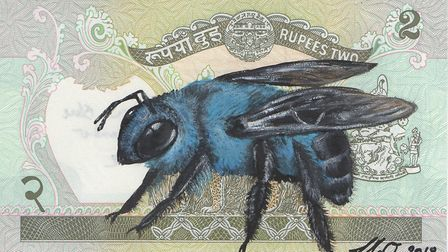 Blue Asian Bee by Louise McNaught