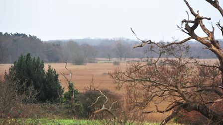 Residents of Reydon Smere opposed plans for a new storage warehouse. The reed beds that are an integ