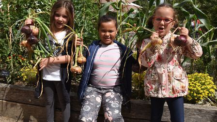Children learning how to sow seeds and pick vegetable at the Valentines Park gardens. Chloe Ventura