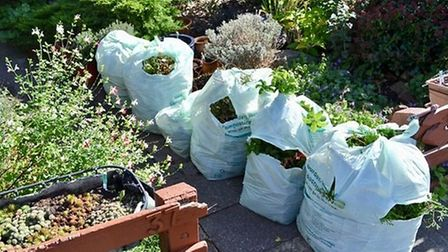 Redbridge Council green waste bags waiting for collection. Picture: RON JEFFRIES