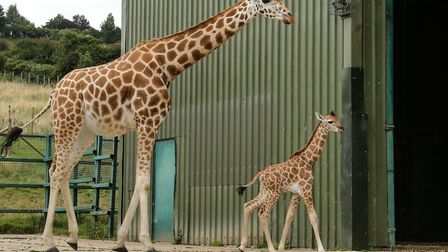 Redbridge Vision and Redbridge Council has been given funding for a zoo. Will they have giraffes? Pi