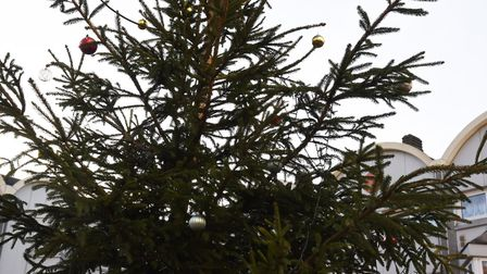 Can you identify Newham's Christmas trees?
