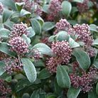 No snow on New Year's Eve but a heavy frost: in a garden in Aldborough Hatch. In the blea