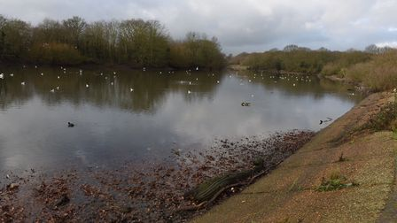 Heronry Pond, one of three lakes in Wanstead Park owned by the City of London. Photo: Ken Mears