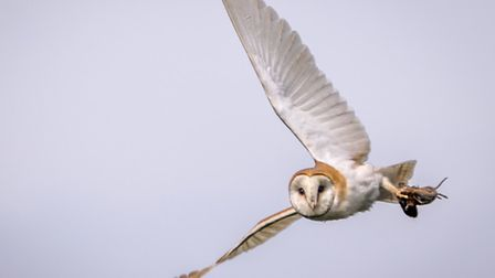 """Geoff Coleman had a """"very lucky morning"""" as he went out to capture some photos of a Barn Owl and spo"""
