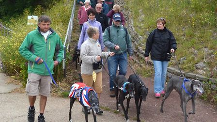 Lowestoft Greyhound Walk. Pictures: MICK HOWES.