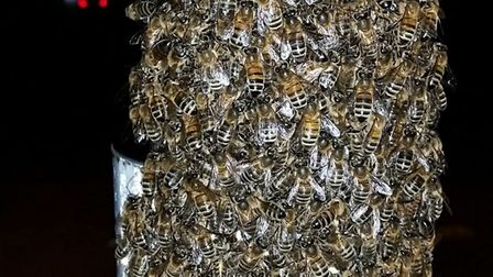A swarm of bees were found gathered on a pole beside a pedestrian crossing in Gidea Park. Picture: G