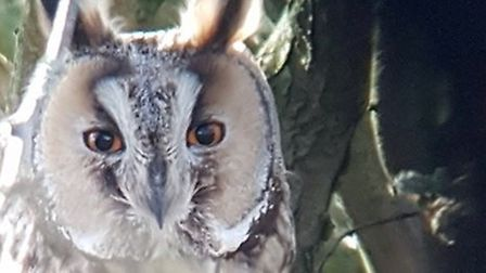 The LNR is home to rare long-eared owls, among other species, which campaigners say are under threat