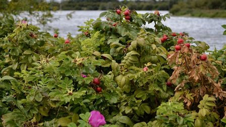 "Autumn - the ""season of mists and mellow fruitfulness"" - has come to Fairlop Waters Country Park. Ph"