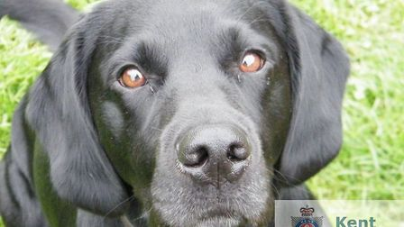 Police dog Sonny helped to sniff out the drugs in the lorry. Photo: Kent Police