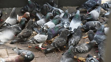 Jennifer Bagram, 65, has to fork out �1,770 after pleading guilty to feeding pigeons when ordered no