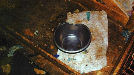 The dogs were malnourished and underweight, and there was little evidence of food or water in the ho