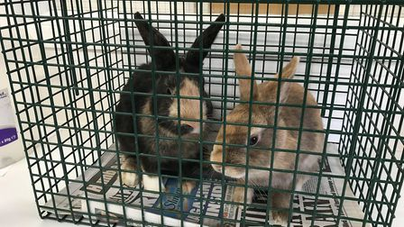 One of the bunnies was with child. Photo: RSPCA
