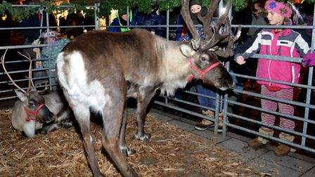 Reindeer Prancer and Dancer were welcome attractions at the Southwold Christmas lights switch-on eve
