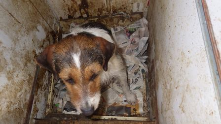 Dogs were found in small cages covered in mess. Photo: RSPCA