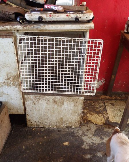 One Jack Russell was kept in a cupboard coverted into a cage. Photo: RSPCA