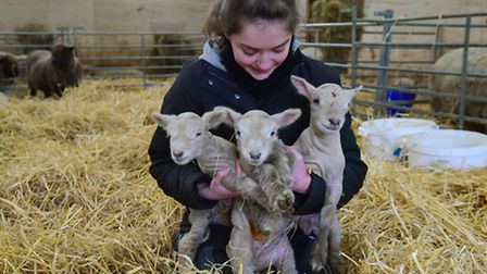 Edie Williamson (17) from Lowestoft has been on work experience at Meen's farm and has been involve