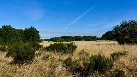 The area of Wanstead Flats before it was mown. Picture: Rosemary Stephens