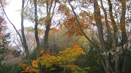 Scenes along one of the walks for visitors to Epping Forest