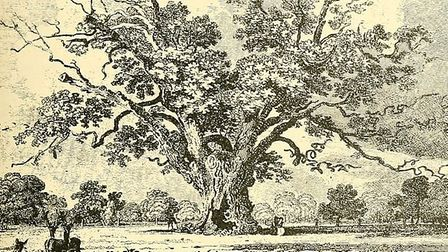 The large oak tree at Fairlop was famous for miles around. Picture: Wikimedia Commons/Essex Field Cl