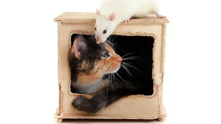 Pets on Parade previous entrants. Cat and rat. Picture: PICTURE STUDIOS
