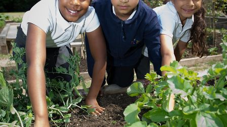 North Beckton Primary School students have a new garden filled with flowers, herbs, seeds, berries a