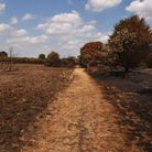 Wanstead Flats after a number of grassfires in 2018. Picture: Ken Mears