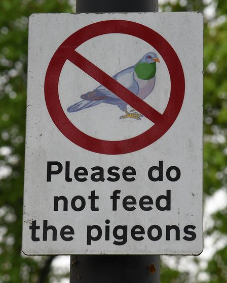 She is banned from feeding the birds. Picture: Ken Mears.
