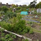 Allotments In Woodford Green