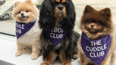 Five-year old Pomeranian Cedric; six-year old Cavalier Kings Charles spaniel Tilly, and five-year ol