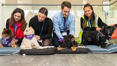 London City Airport staff befriend The Cuddle Club dogs on National Stress Awareness Day. Picture: A