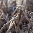A Generic Photo of frost covered reeds. See PA Feature GARDENING Frost. Picture credit should read: