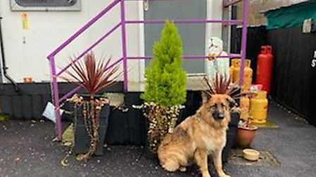 Wallace Kennels are appealing for donations for homeless dogs this Christmas. Picture: Dee Robinson.