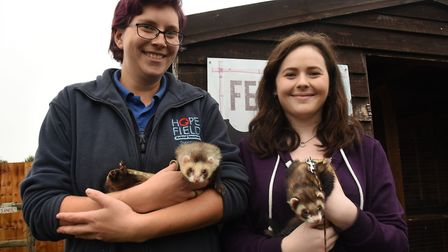 Reporter Hayley Anderson on the right helping out as a volunteer at the Hopefield Animal Sanctuary i