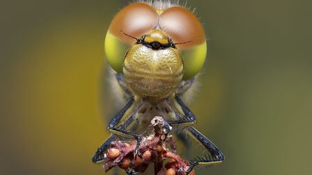 The �Pattern and Texture� award was won by Andrew Neal�s detailed image of a common darter dragonfly