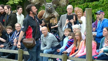 Crowds enjoying the Birds of Prey flying display at Africa by Night. Pictures: Mick Howes