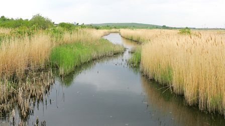 Once large parts of Havering were covered in marshes like this at Rainham. Picture: Paul Bennett